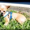 2015-08-25_P8250052_Peanut   Clearwater,Fl