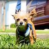 2015-08-25_P8250049_Peanut   Clearwater,Fl