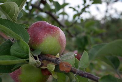 Apple Picking @ Melick's 9/21/14