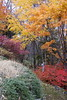 Fall Colors in the Mountains of Japan