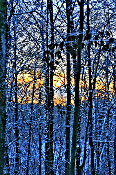 Birch_MorningFreeze (2)