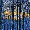 Birch_MorningFreeze (2)