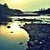Birch_Morning (2)