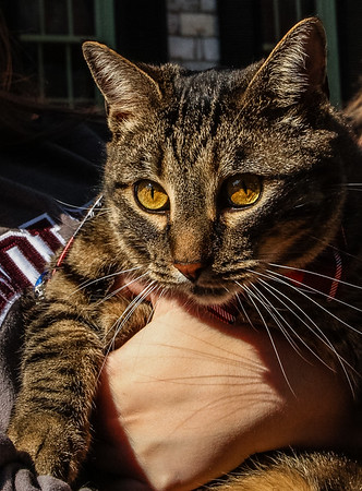 Midtgard Cat_Winchester_10.25.2014