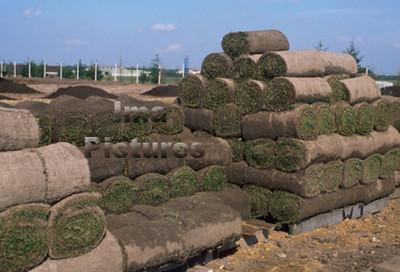 landscaping tuinaanleg aménagement paysager