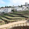 """Disused agricultural terraces and the new urbanisation of """"La Romantica"""", near Puerto.  The changed face of the tenerife economy."""