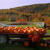 Pumpkin Tractor Panorama