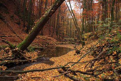 Apát-kúti-völgy ősszel