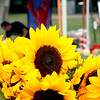 Sunflowers abound at the Pepperell Farmers Market at the town field. SUN/David H. Brow