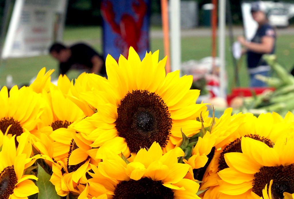 . Sunflowers abound at the Pepperell Farmers Market at the town field. SUN/David H. Brow