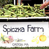 Hand picked corn from Spiczka Farm of Groton, at the Pepperell Farmers Market. SUN/David H. Brow