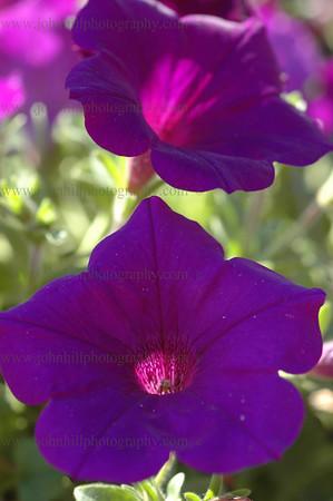 DSC_0018-flower
