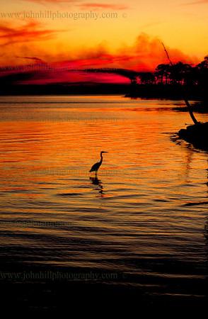 Perdido Key Heron