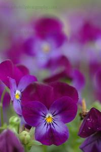 DSC_0016-flower