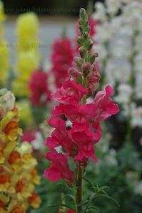 DSC_0015-flower