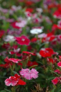 DSC_0019-flower