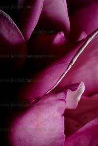 38-flower
