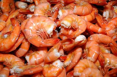 shrimp-DSC_0001