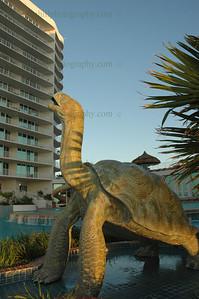 DSC_0084-b-l-u-clo-pool turtle