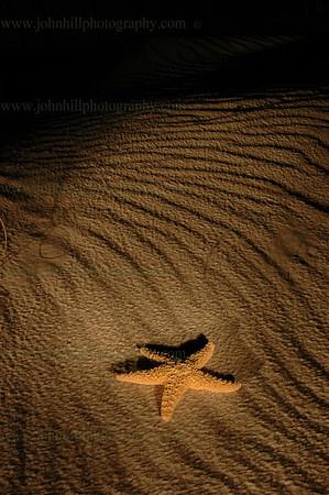 DSC_0060-starfish