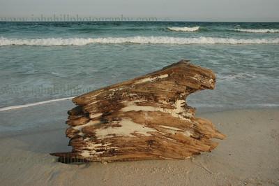 DSC_0032-driftwood