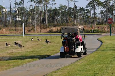 DSC_0220-golf