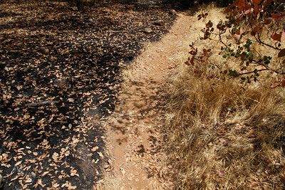 A walking path splits the burnt from the unburnt. The Peregrine Point Disc Golf Course was scorched by the Stoney Fire. The charred course is seen Tuesday, Aug. 14, 2018, in Chico, California. (Dan Reidel -- Enterprise-Record)