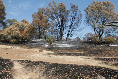 Near hole No. 2. The Peregrine Point Disc Golf Course was scorched by the Stoney Fire. The charred course is seen Tuesday, Aug. 14, 2018, in Chico, California. (Dan Reidel -- Enterprise-Record)