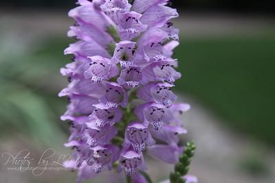Obedient Flower