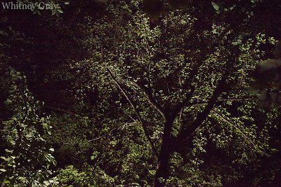 blog trees IMG_5310
