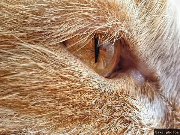 Oko Słomki