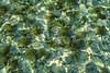 Turtle Grass Fly Fishing Turneffe Belize