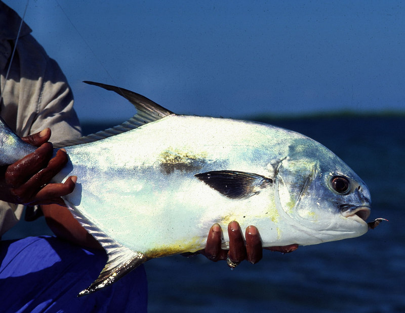 Belize Permit Fly Fishing