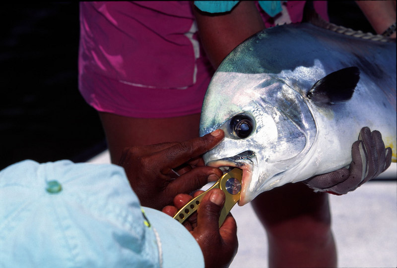 Removing Fly Wendy Gunn and Permit Belize Fly Fishing