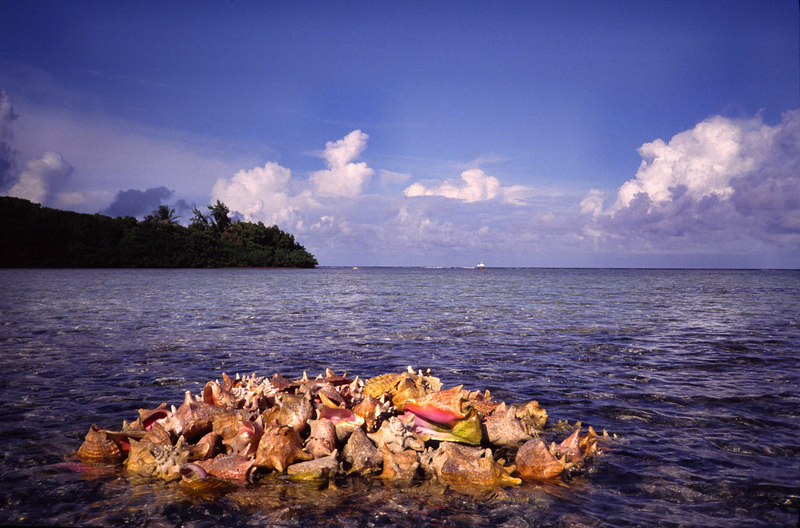 Conch Pile on the Reef Fly Fishing Turneffe Belize