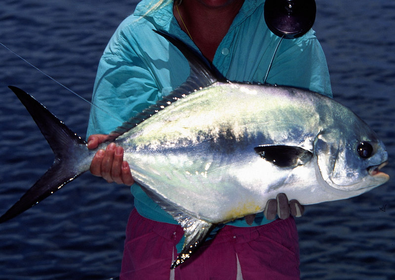 Belize Permit