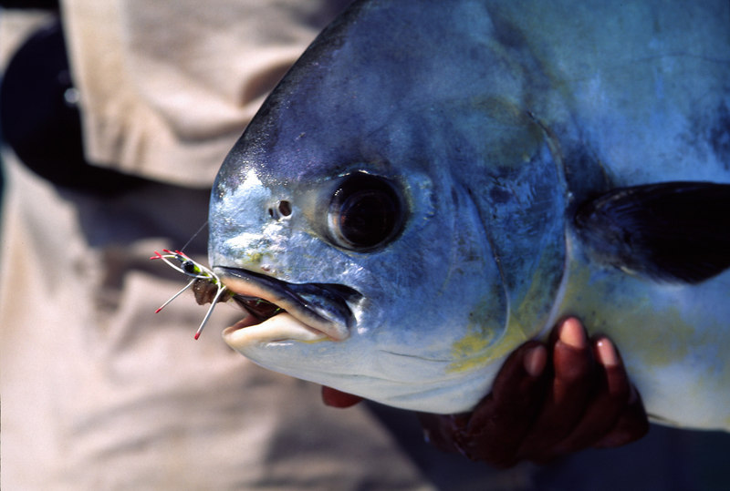 Permit and Merkin Crab Belize Fly Fishing