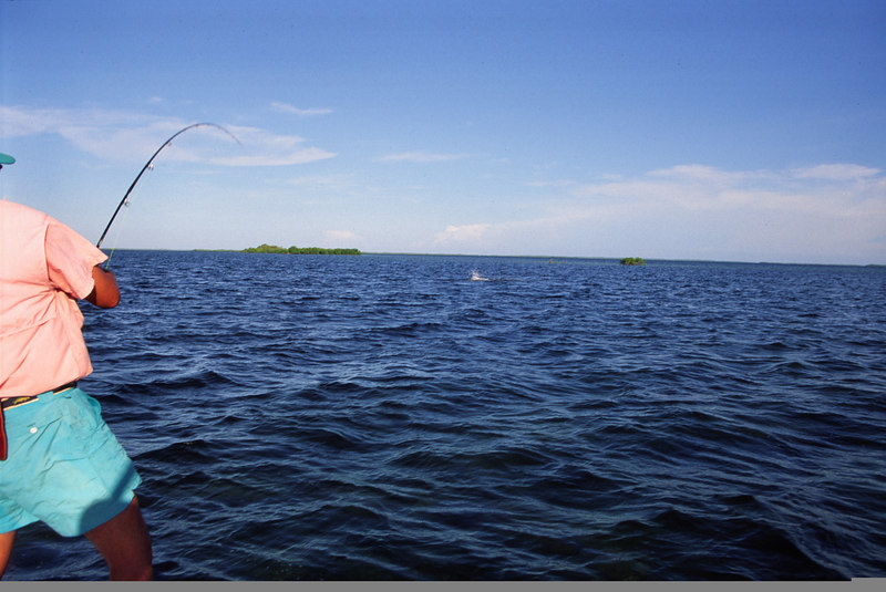 Terry Gunn Fighting Tarpon Fly Fishing Belize