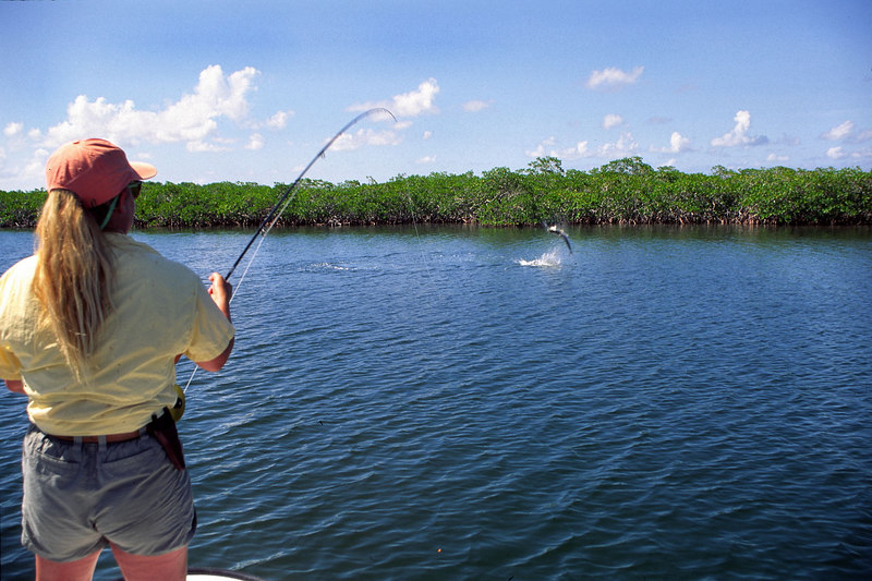 Wendy Gunn Fighting Jumping Tarpon Fly Fishing Belize