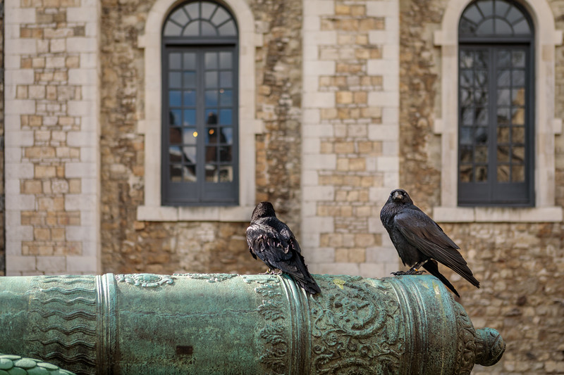 black crows of the the tower of london