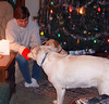 Shadow helping Stephen with his stocking.
