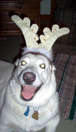 Shadow a happy dog with antlers