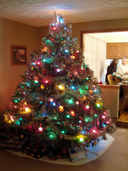 Uncle David's Tree. It is smaller then the one at home.