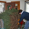 stephen helping to bring mom and dad's tree in