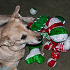 Smokey with all her Christmas toys.