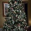 Aunti Darleen's Tree
