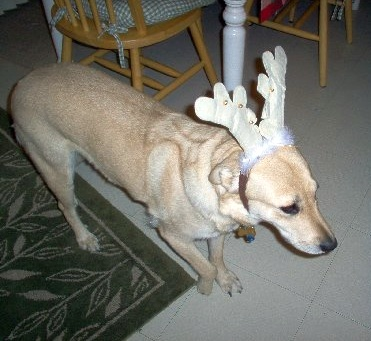 Smokey dealing with the antlers