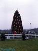 It is the National Christmas Tree, which is part of the pageant of peace.