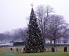 The National Christmas Tree.  It was donated by the state of Vermont.