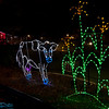 cow in lights